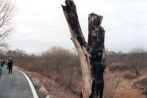 800px-DMZ_incident_tree