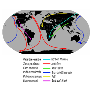 Migrationroutes.svg