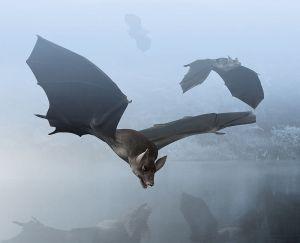 800px-Palaeochiropteryx_Paleoart