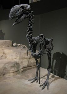 Gastornis,_a_large_flightless_bird_from_the_Eocene_of_Wyoming
